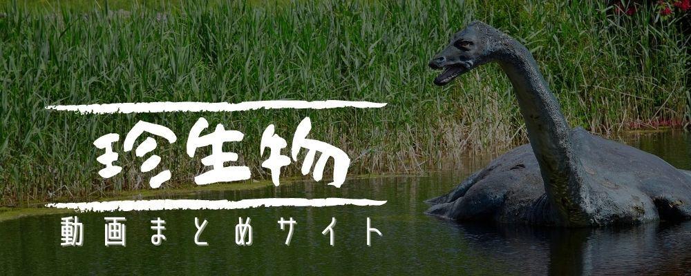 珍生物動画まとめサイト